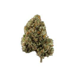 original green bud hybrid