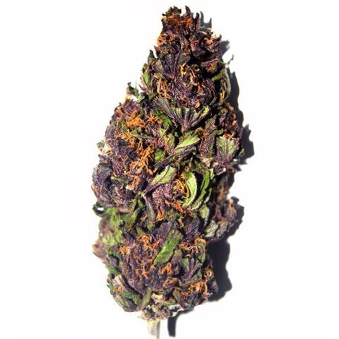 purple haze sativa