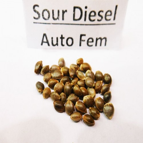 Sour Diesel Seeds Auto Fem