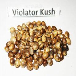 Violator Kush Seeds